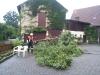 20120701-baum-auf-zaun-8